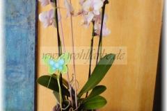 Orchideentopf1